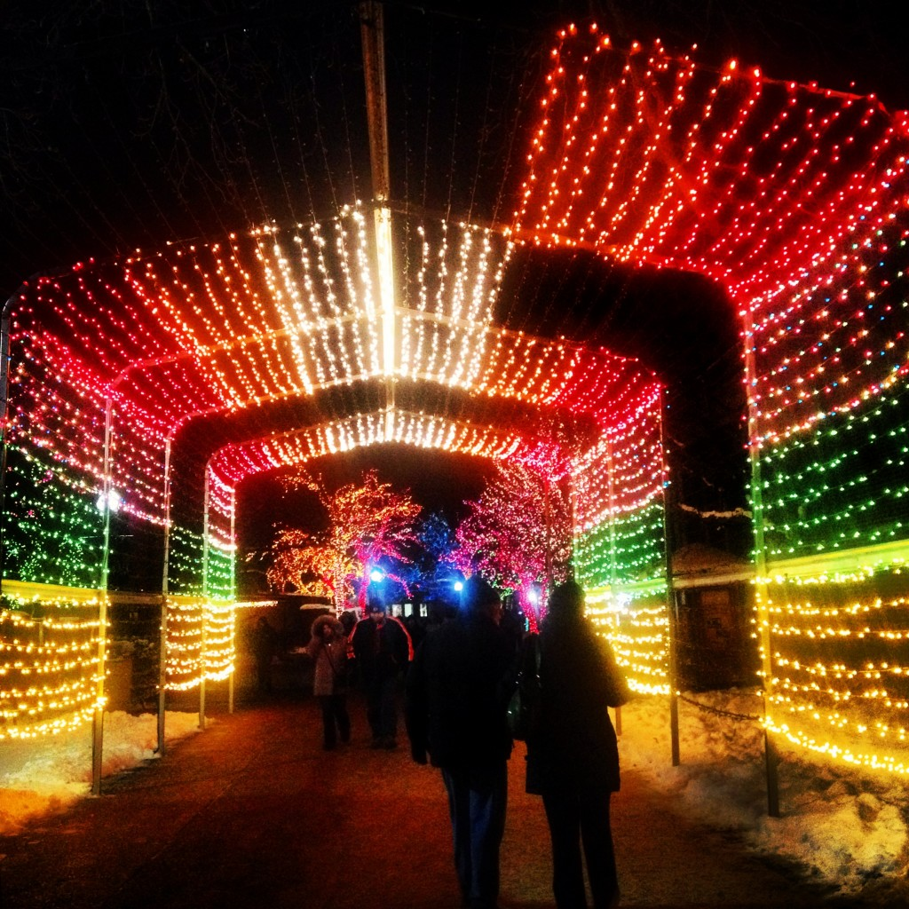 night of lights lincoln park zoo