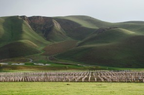 California Wine Country D