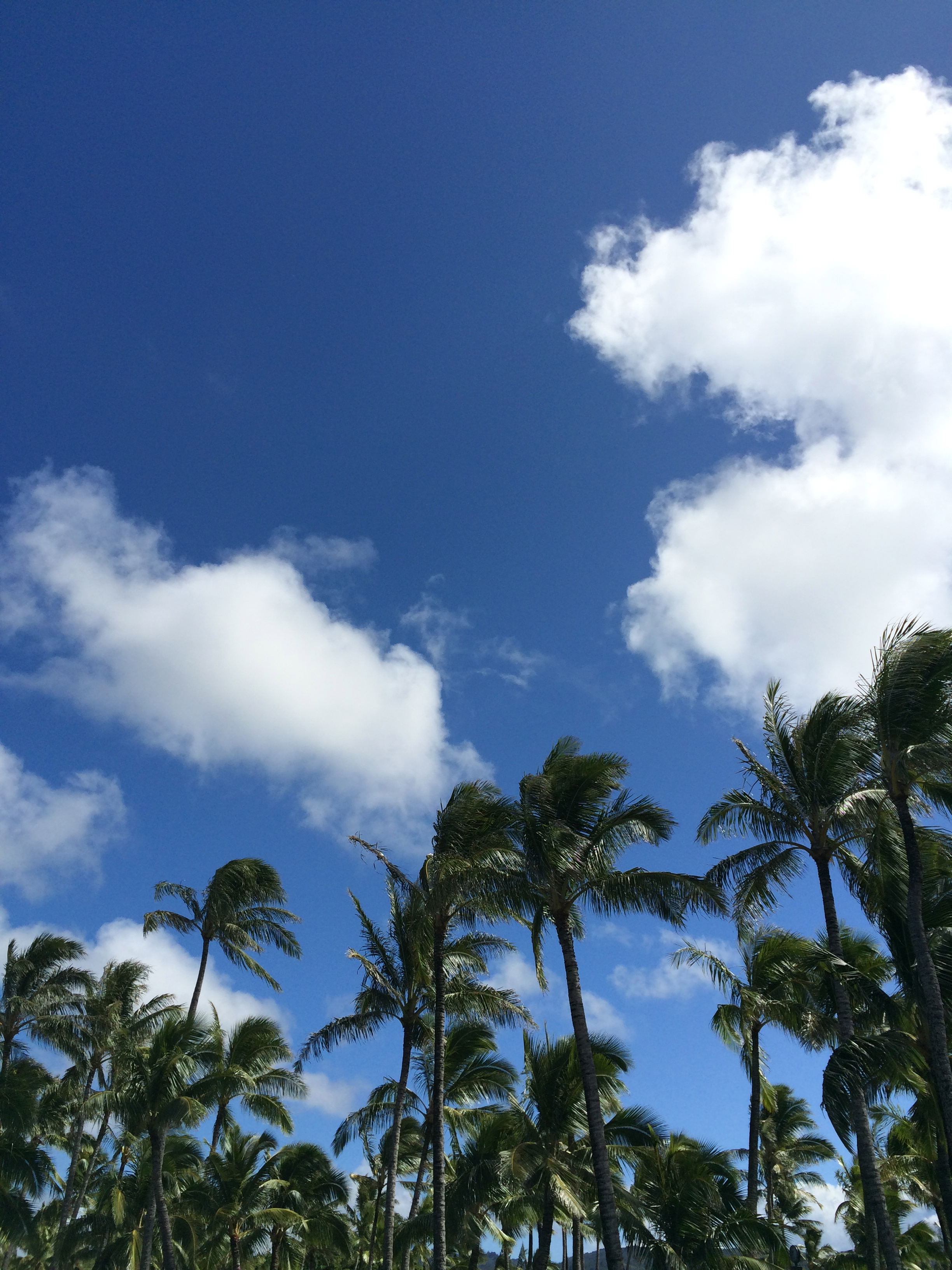 North Shore Oahu: Snorkeling & Cliff Jumping