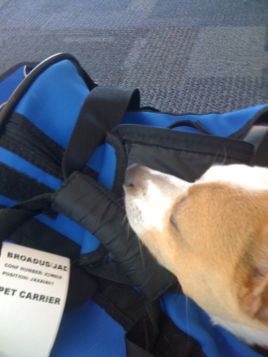 Traveling with Pets: Find the Perfect Dog Carrier