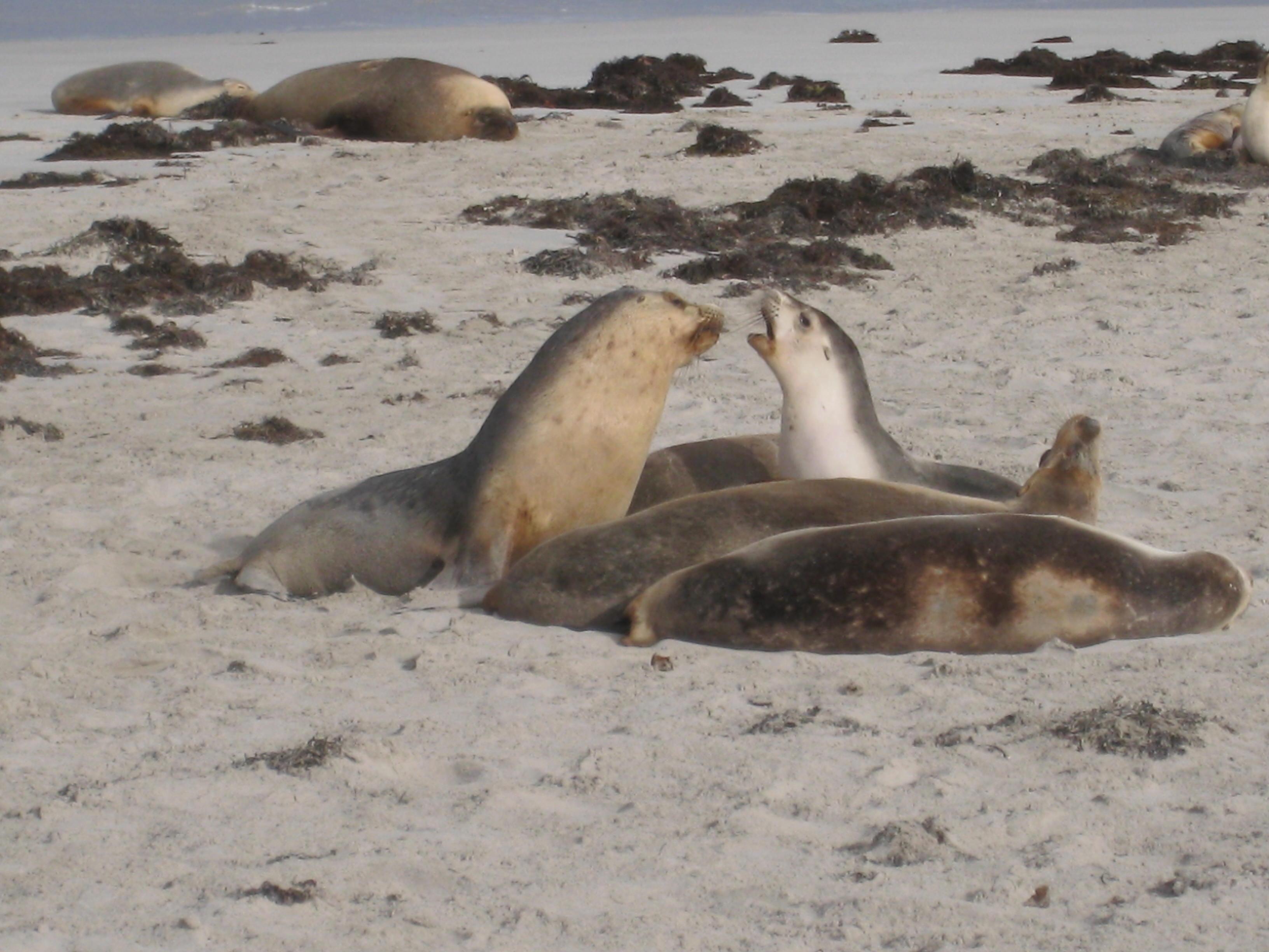 48 Hours on Kangaroo Island: Seal Bay