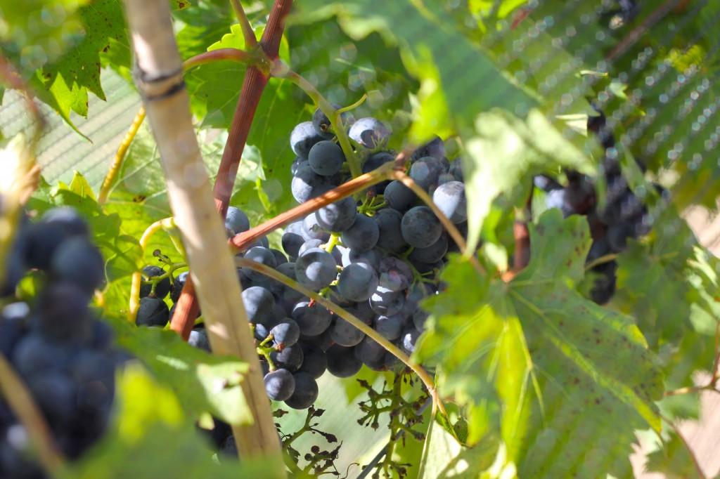 Wine tasting Nashville, Tennessee