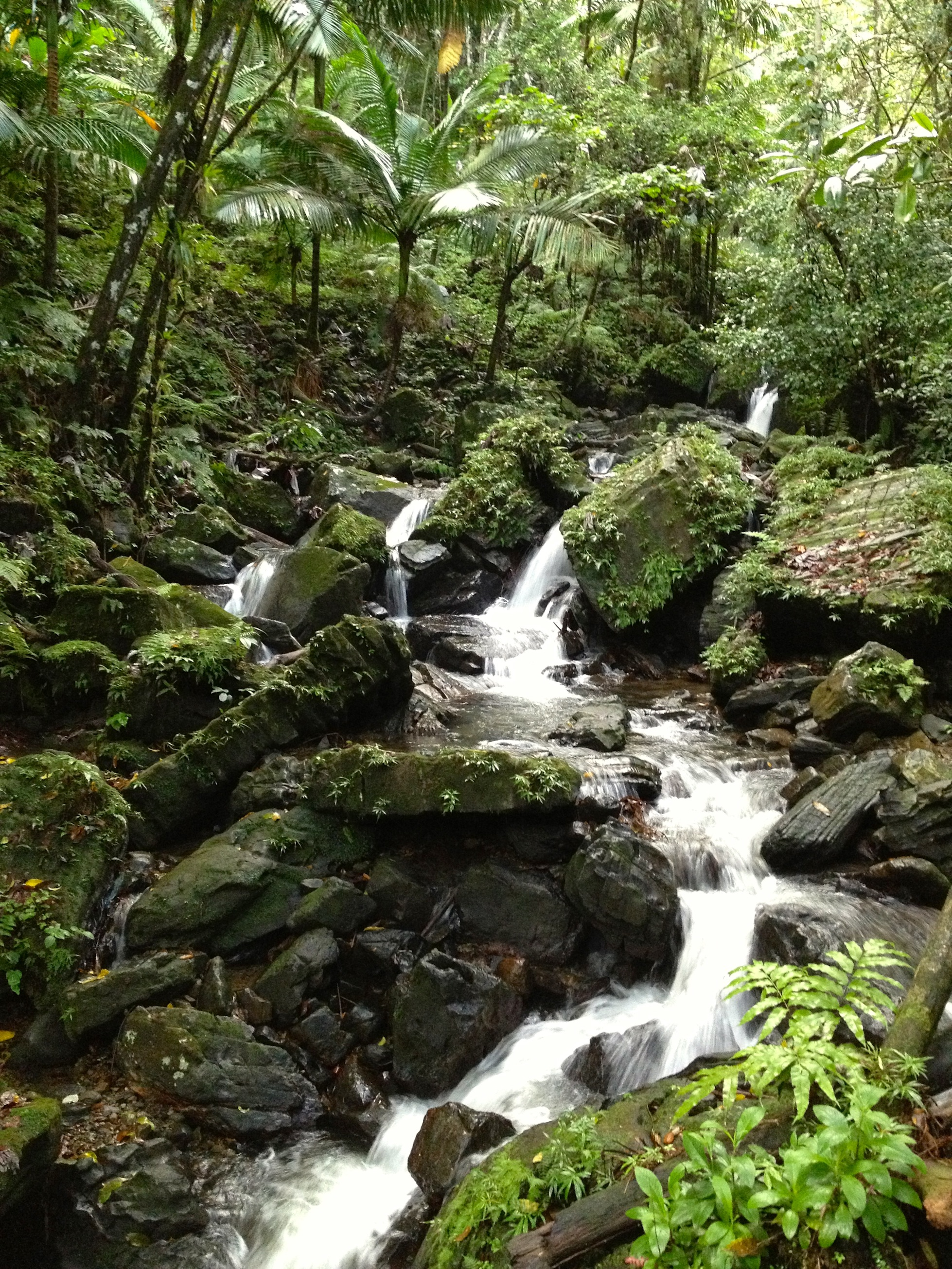 What to do in puerto rico el yunque rainforest waterfalls for Waterfall it