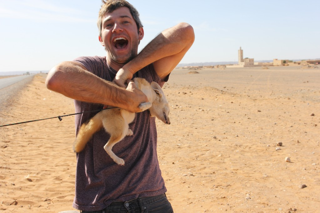 Petting A Fennec Fox In The Sahara Desert