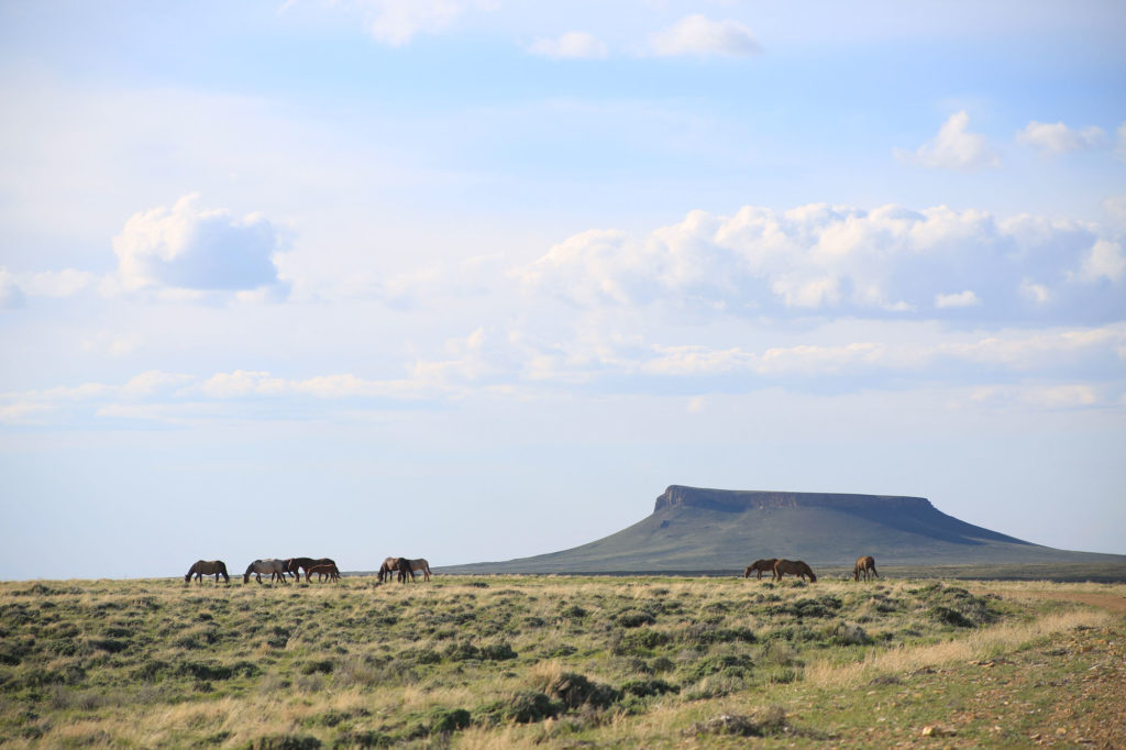 Wild Horse Loop Wyoming